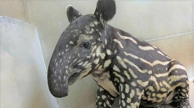 画像: 提供 静岡市立日本平動物園