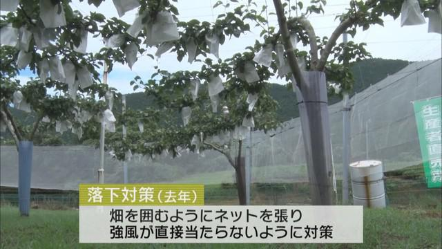 画像2: おととしは75万円の被害