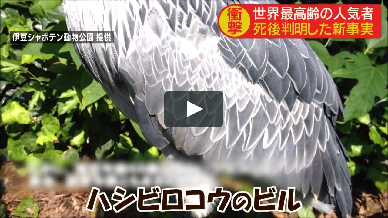 画像1: 0908yh vimeo.com