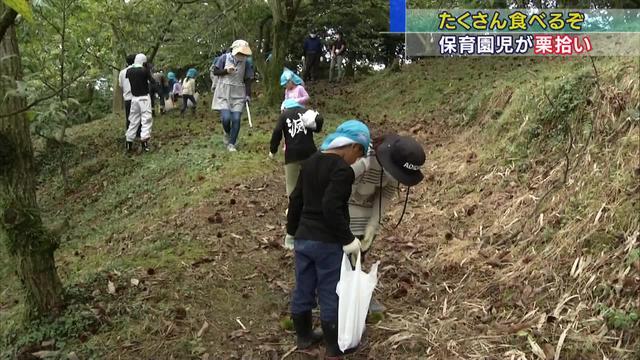 画像: 栗拾いをする保育園児たち