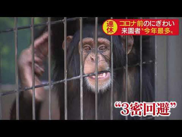画像: 4連休3日目は今年最多の来場者 ロッシー君の周りは開園直後から人だかり 静岡市 日本平動物園 youtu.be