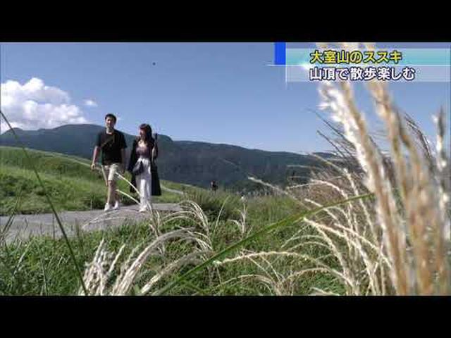 画像: 秋の気配が… 山全体がススキの穂でおおわれる 静岡・伊東市 youtu.be