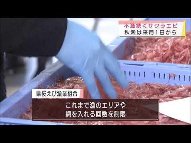 画像: 不漁のサクラエビ漁 秋漁は11月1日から 自主規制は継続 静岡県 youtu.be