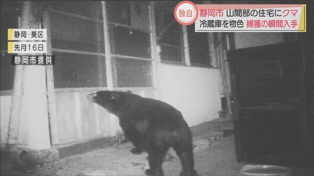画像1: 住宅にクマ…冷蔵庫開け食糧物色か 8月ごろから目撃情報相次ぎ、ついに捕獲 静岡市