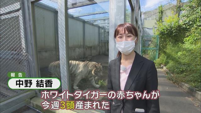 画像1: 三つ子のホワイトタイガー わずか5日で体重は1.5倍 静岡・東伊豆町