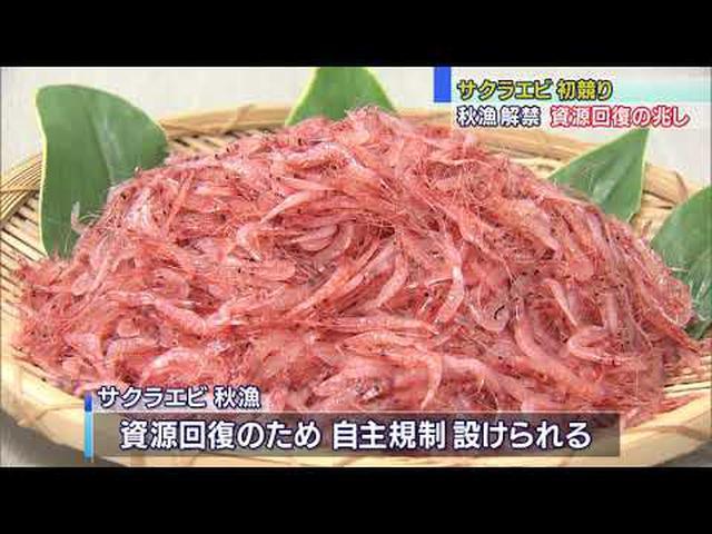 画像: サクラエビ秋漁初競り平均価格去年を下回る youtu.be