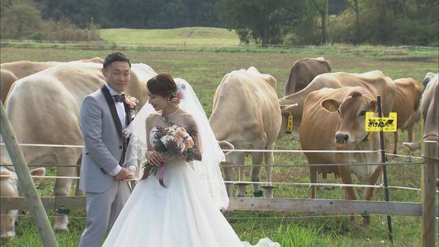 画像1: コロナ禍の新定番? 3密避け、牧場で結婚式 入刀はチーズで 静岡・富士宮市