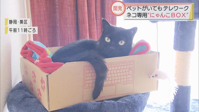 画像: ネコがいる家庭のテレワークに「にゃんこBOX」…段ボールを扱う静岡市の企業が開発