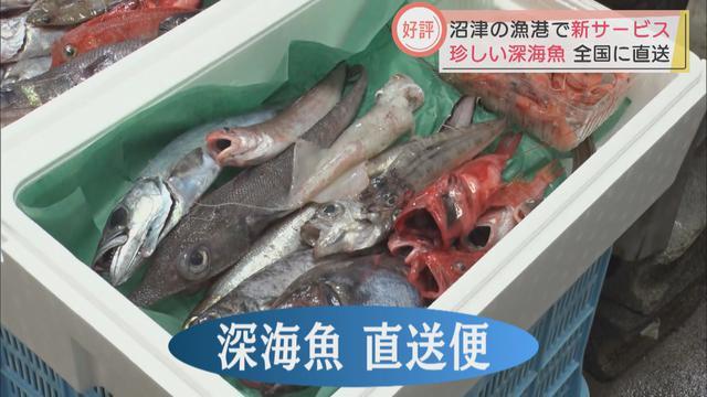 画像: コロナ禍で人気急上昇「深海魚直送便」が漁師を救う 戸田漁港