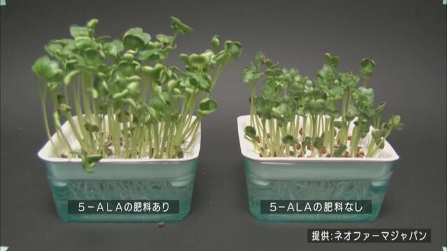 画像: 植物の成長も早い