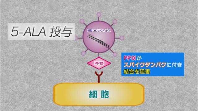 画像: PP9がスパイクタンパクの結合を阻止して感染を防ぐ
