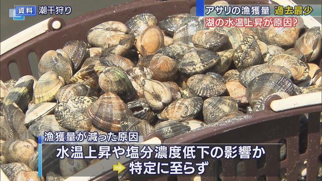 画像: 浜名湖のアサリ漁獲量過去最低 水温上昇が原因か youtu.be