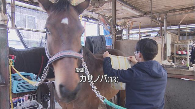 画像: 愛馬「カサノバ」の世話をする稲葉選手