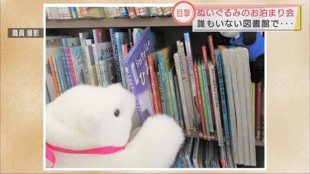 画像: 夜になると・・・図書館でぬいぐるみたちが大冒険「ぬいぐるみの図書館お泊り会」 youtu.be