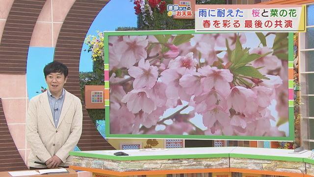 画像: 【4月6日 静岡】渡部さんのお天気 あすは「日差したっぷり」 youtu.be