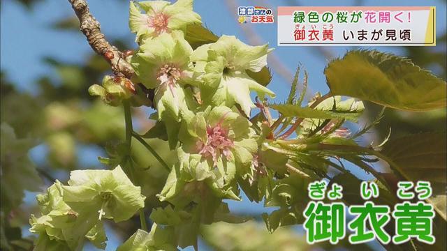 画像: 【4月7日 静岡】渡部さんのお天気 あす「午後は不安定」 youtu.be
