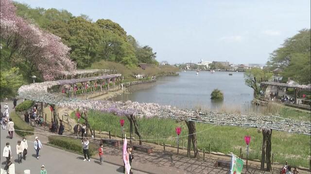 画像: 「藤まつり」中止…17日から開催予定 公園内の飲食の出店はテイクアウトだけ 例年の半数以下に 静岡・藤枝市