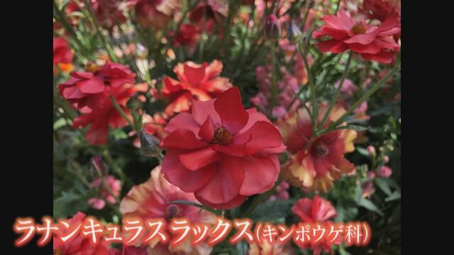 画像2: 地元の人に聞く おススメの花