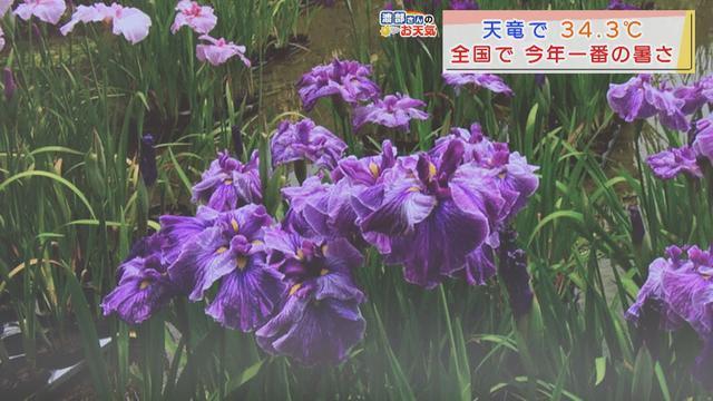 画像: 【6月8日 静岡】渡部さんのお天気 浜松・天竜で34.3℃…全国で今年一番高い気温 あすは「暑さの強い日差し」 youtu.be