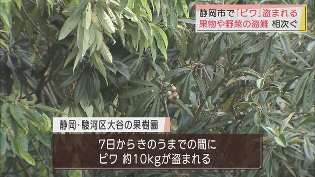 画像: 今度は「びわ」 静岡県内では野菜や果物が盗まれる被害が相次ぐ