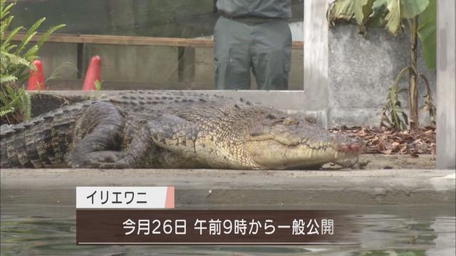 画像3: 体長5m超、重さ800Kg…世界最大の「人食いワニ」が来た! 目標は巨大ワニの繁殖 静岡・河津町の体感型動物園「iZoo」
