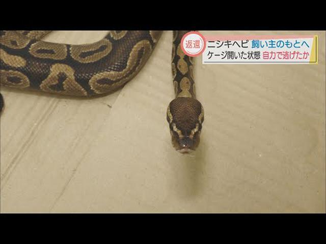画像: 浜松市のニシキヘビ 飼い主が判明 空いたケージから逃げ出したか youtu.be