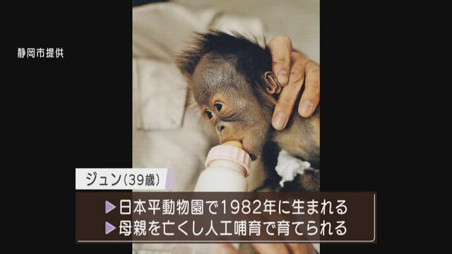 画像1: 静岡市提供