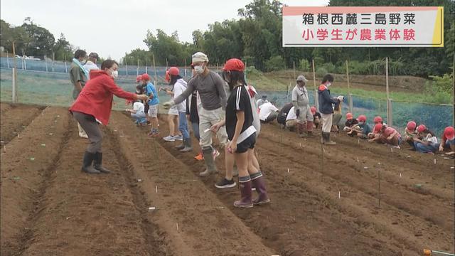 画像: 小学生が地元ブランド野菜の種まきと苗植え体験 静岡・三島市