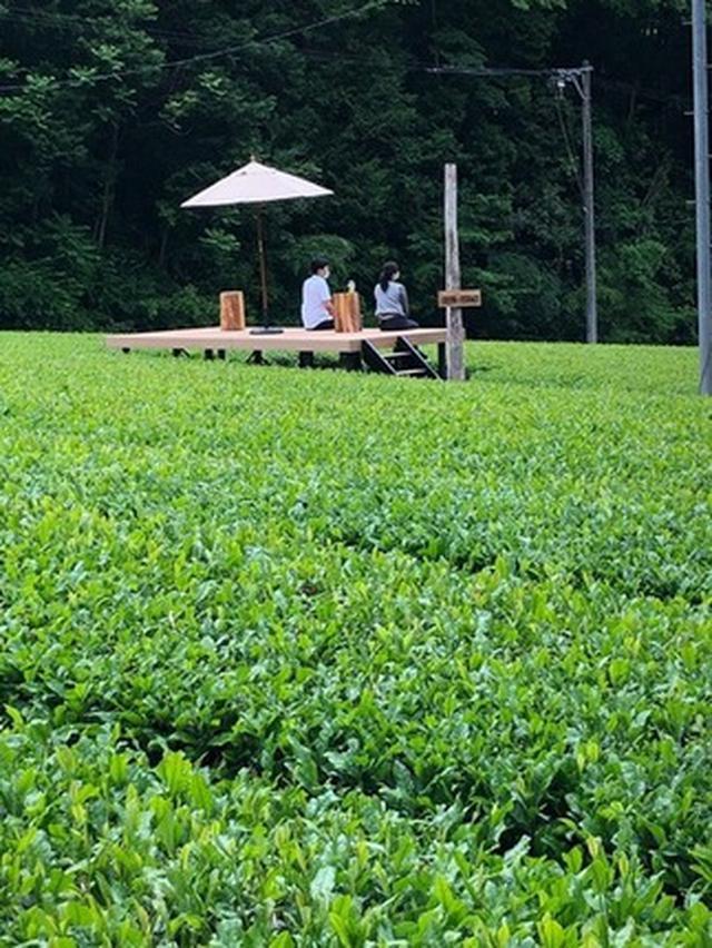 画像1: 茶畑テラス