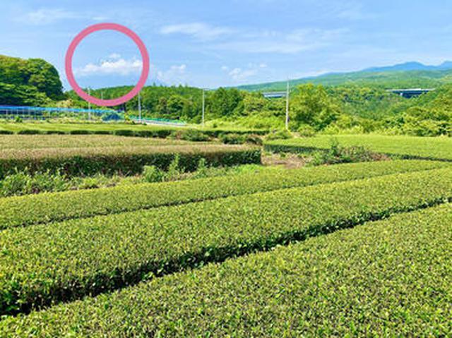 画像2: 茶畑の中の茶の間