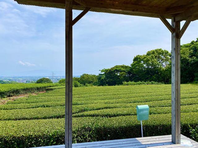 画像3: 茶畑の中の茶の間
