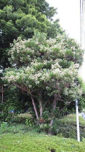 画像4: アレに似ている可愛い花