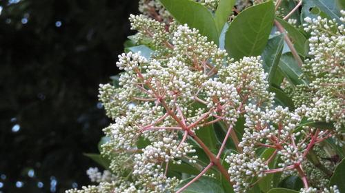 画像2: アレに似ている可愛い花