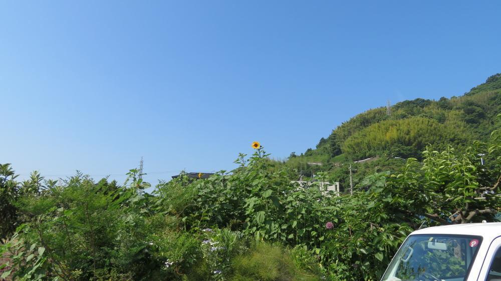 画像2: 暑すぎて咲いちゃった!