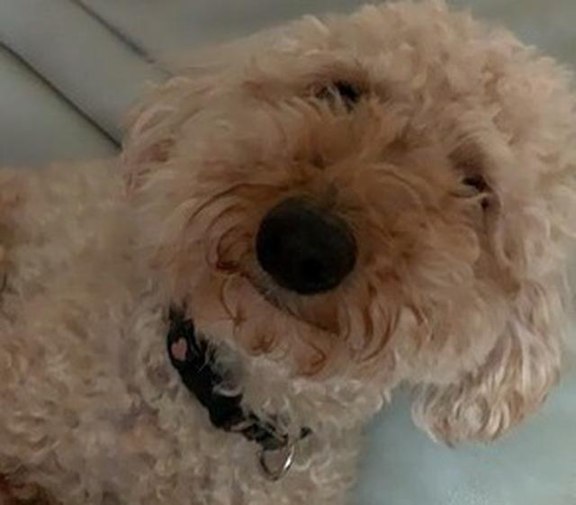 画像2: 愛犬もこ 初めてのおうちトリミング
