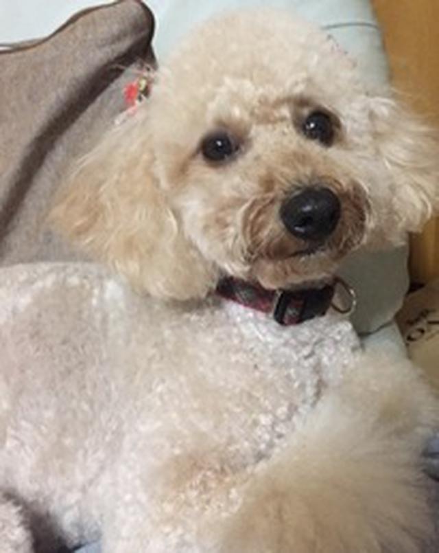 画像1: 愛犬もこ 初めてのおうちトリミング