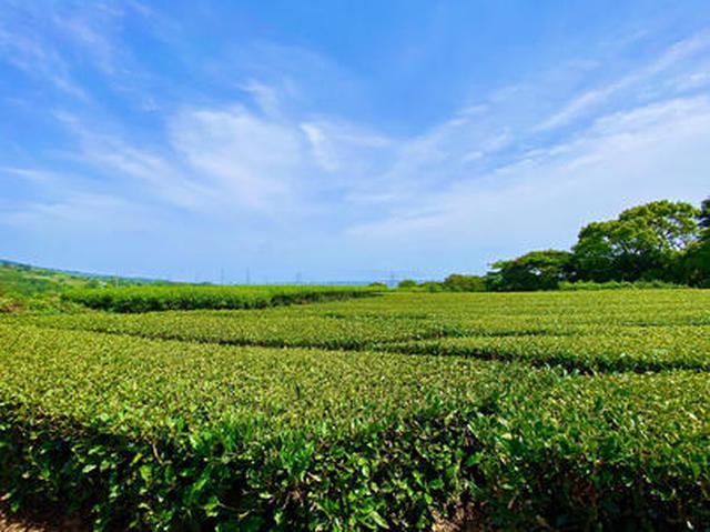 画像1: 茶畑の中の茶の間