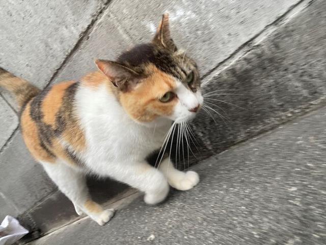 画像2: 猫ちゃん