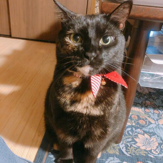 画像3: 猫ちゃん