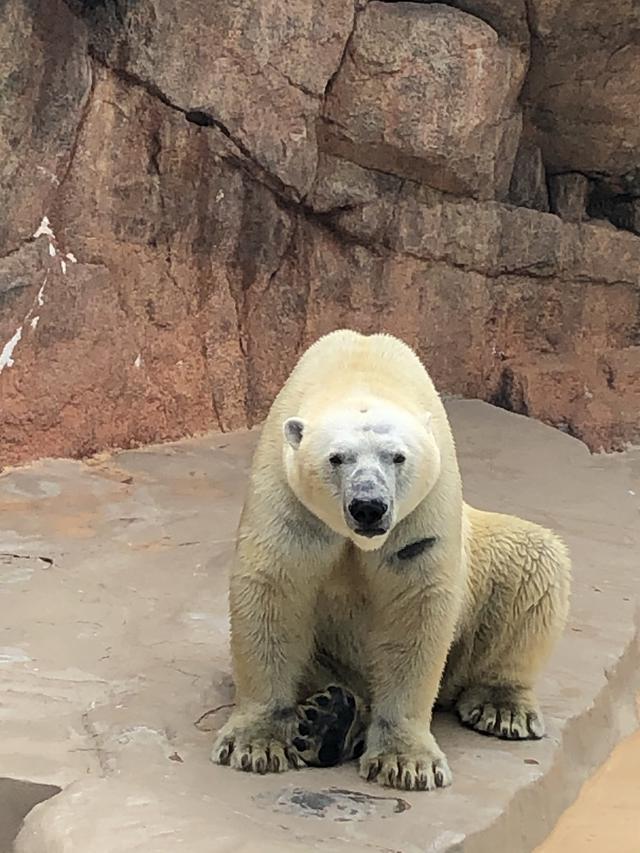 画像1: 日本平動物園!