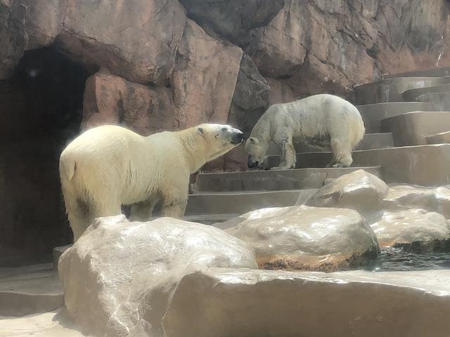 画像2: 日本平動物園!