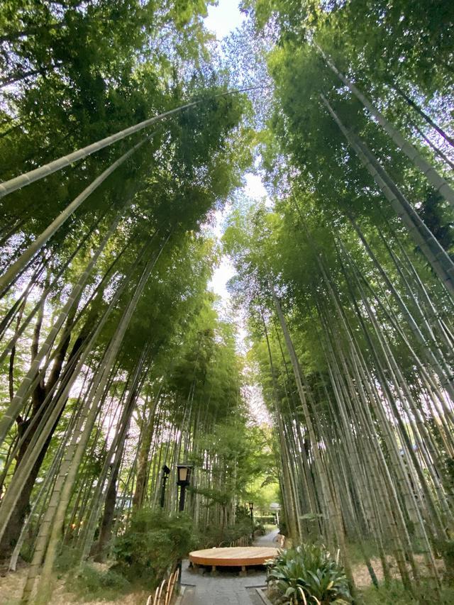 画像4: 伊豆の小京都