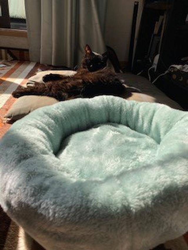 画像: (ねこベッドに対して、冷ややかな視線を送るねこ氏)