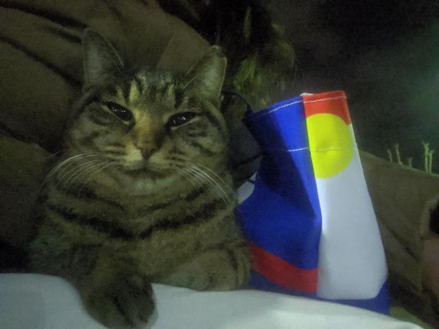 画像: 笑顔かな。不思議の国のアリスのチェシャ猫さんかな。