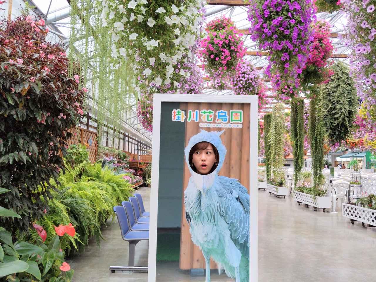 画像: はしびる  鳥だけじゃなくお花も圧巻