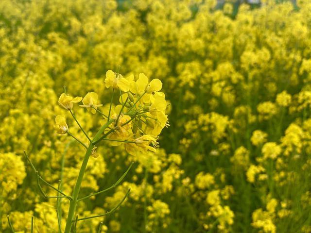 画像2: 春のコラボ