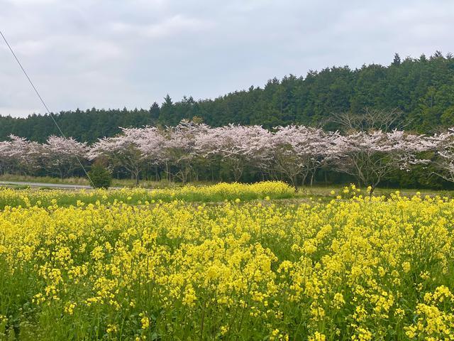 画像1: 春のコラボ