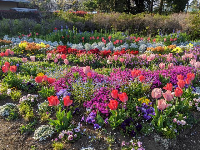 画像: 同じく2020年、コロナ禍。こちらは休日。駿府城公園で、お散歩花見。ウォークスルー花見。