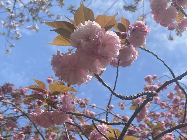 画像1: 春のおすそ分け