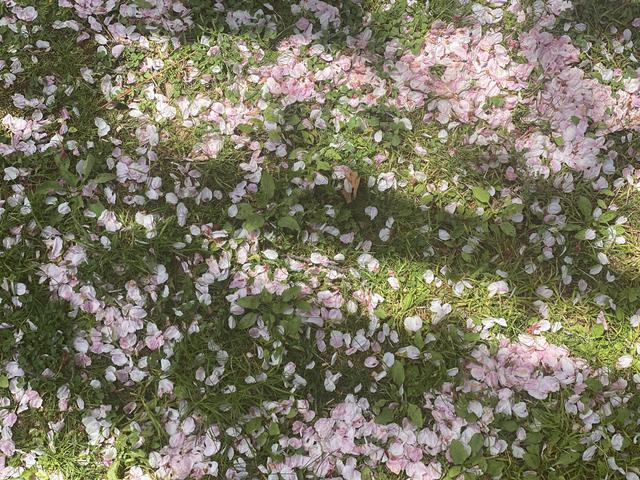 画像2: 春のおすそ分け